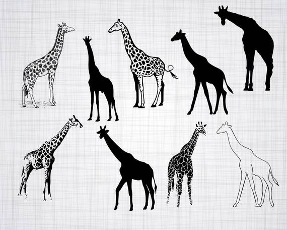 Giraffe Svg Bundle Giraffe Svg Giraffe Clipart Giraffe Cut Etsy