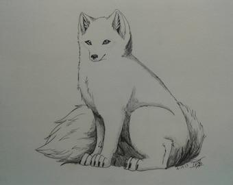 Arctic Fox Drawing