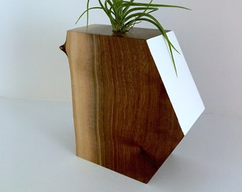 Ursa Minor:  Air Plant Sculpture in walnut
