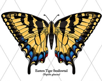 Eastern Tiger Swallowtail Butterfly Clipart in Multiple Colors