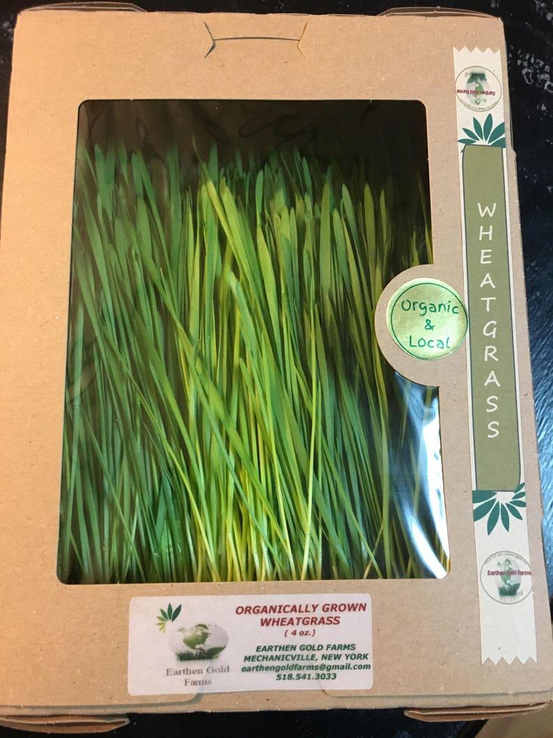 16 ounces of Organic Wheatgrass weight loss non-gmo seeds image 0