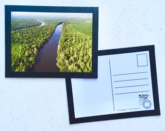 Natural Postcards - Set of Four