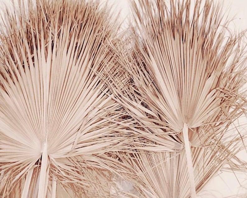 Giant Sun Dried Fan Palm Giant Home Decor Tropical Decor Etsy