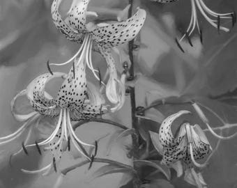 Black and White Painterly Tiger Lilies Nature Photograph Digital Download