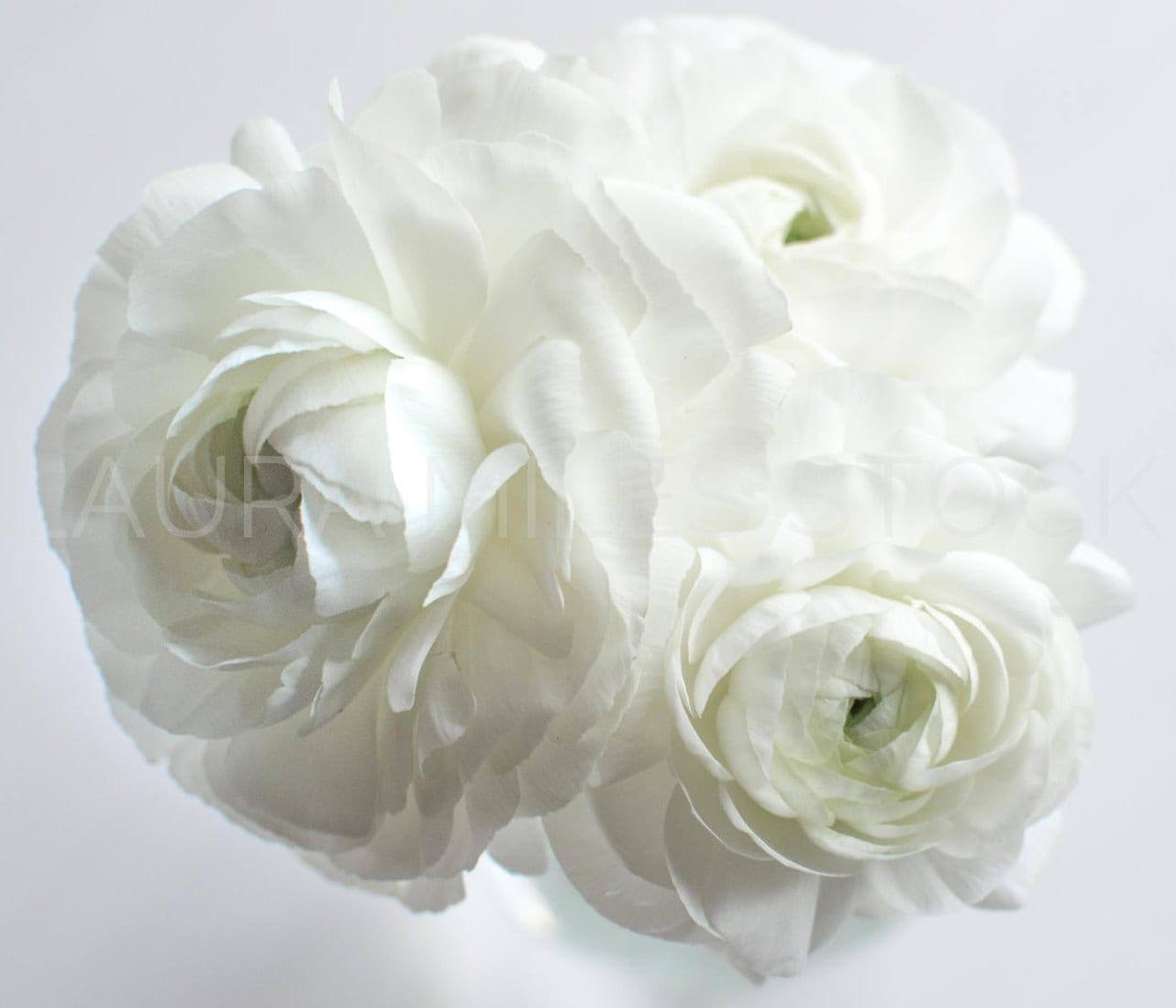White Flowers Elegant White Ranunculus Styled Stock Etsy