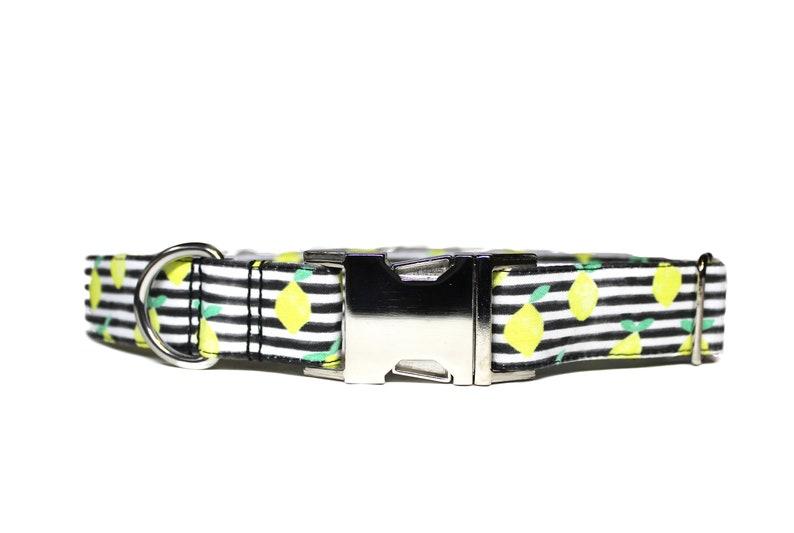 Lemon & Stripes Dog Collar Summer Dog Collar Dog Mom Gift image 0