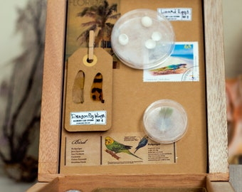 Florida Curiosity Box