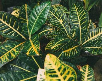 Botanical Garden Textures Print