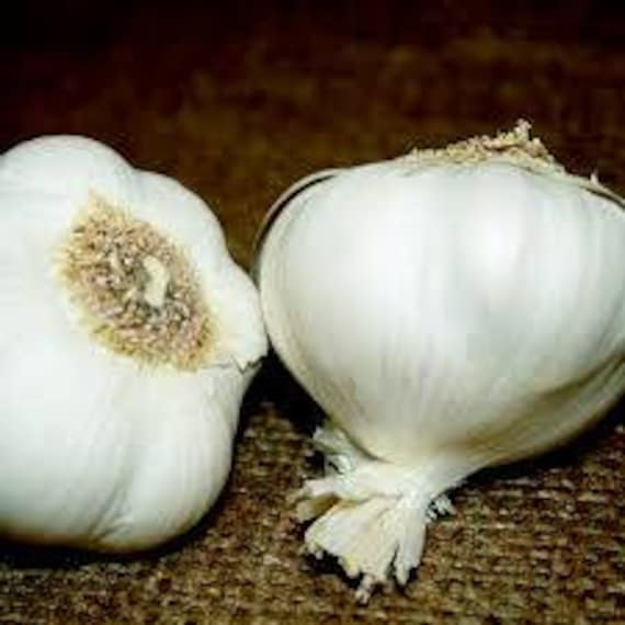 Super Gaint Garlic Seeds Plants Bonsai Organic Onion Vegetable Rare 100pcs