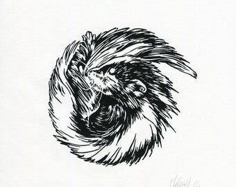 Sleeping Skunk