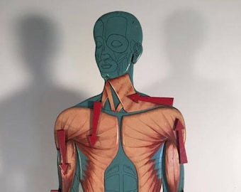Hand painted wood anatomical model