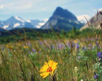 Nature Photography, Botanical Photography, Montana Photography