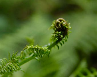 Nature Photography, Botanical Photography, Moss Photography, Fern Photography