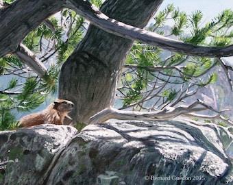 Peinture animalière à l'Acrylique d'une Marmotte se prélassant au soleil sur un rocher des montagnes Pyrénées