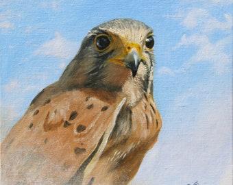Peinture animalière Faucon crécerelle .Portrait animalier à l'huile sur toile peint par Bernard Guédon , peintre animalier et nature.