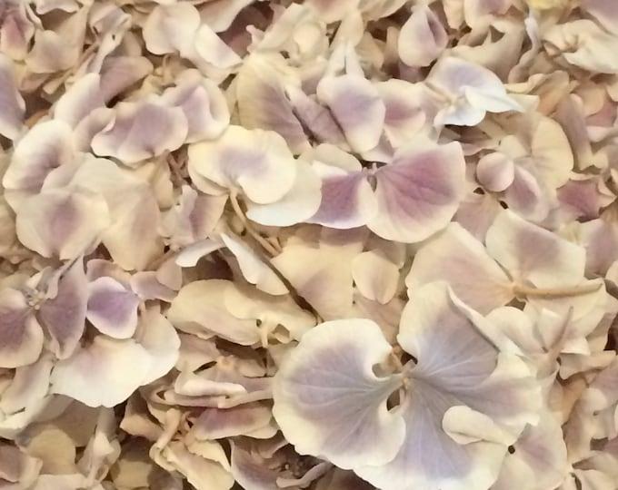 Featured listing image: Petal Confetti: Lilac Haze larger Petal Biodegradable Confetti, Pack of 5