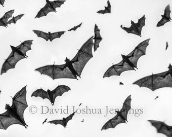 Dusk in the Palace Gardens - Bats Photograph - India 2017 - Udaipur - Sky Full of Bats - Fine Art Photography Print
