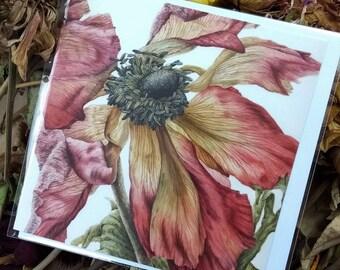 Fading Red Anemone Botanical Greetings Card