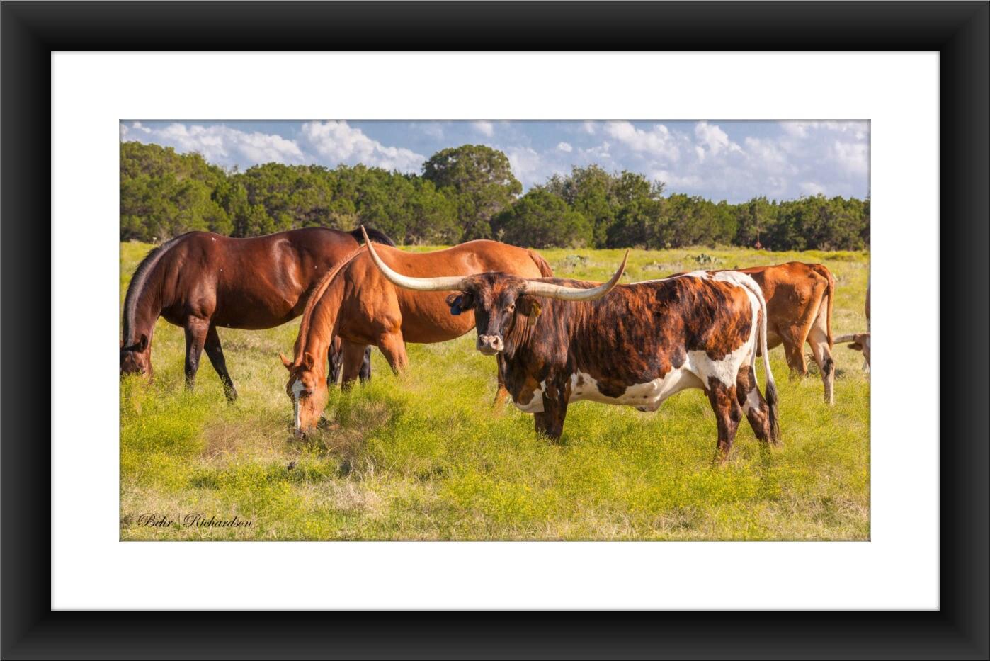 A Fine Art Print of Texas Longhorn and Horses Longhorn