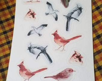 Bird studies stickers