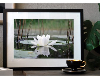 Photo. Waterlily Photo, Gift for her, Floral Photography, Botanical Art, Botanical Photo, Fine Art Photography, Flower Photography