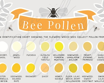 A4 Educational Bee Pollen Chart - Digital Print Only- Bees, honeybee, beekeeping, beekeeper - PDF, PNG, JPG