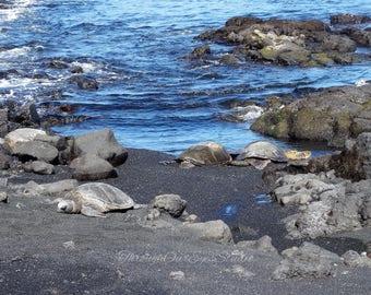 Turtles at Punalu'u Beach