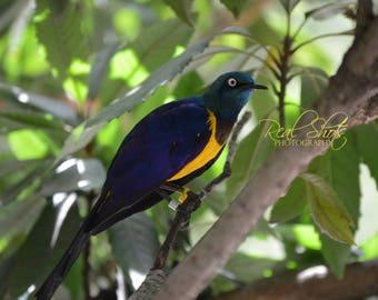 Blue bird in Sanctuary