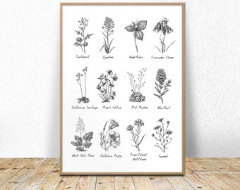 8x10 16x20 print etsy flower chart print with names and titles botanical chart herbarium black and white chart poster printable floral 16x20 11x14 8x10 mightylinksfo