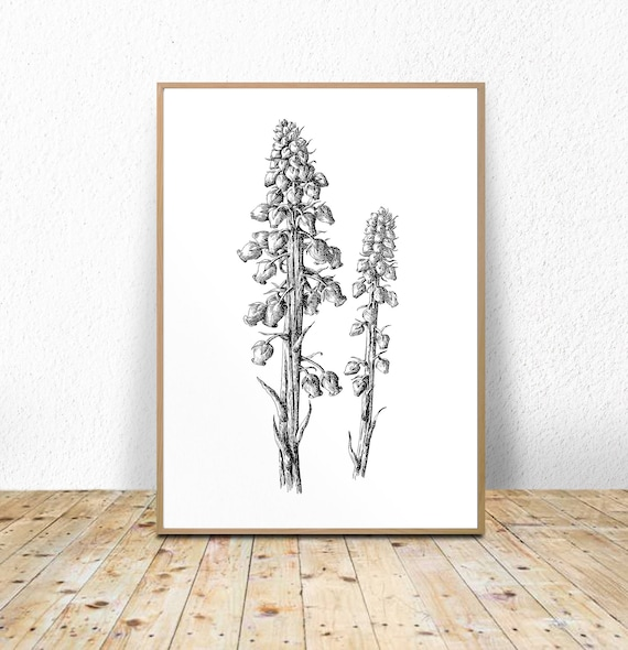 scandi print nordic print Botanical Printable contemporary print botanical illustration,minimalist botanical Modern Botanical Art Print