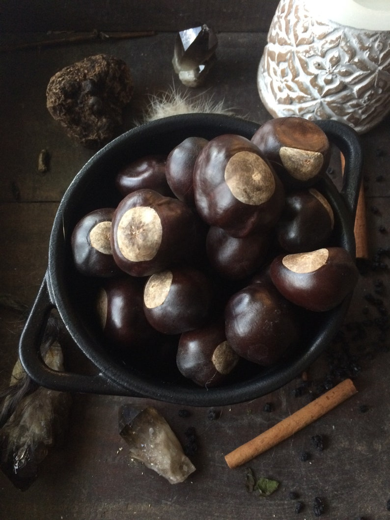 Lucky Buckeye Nut, Hoodoo, witch herbs, virility, luck, Ohio buckeye, OSU,  Buckeye craft, Metaphysical gift, money manifestation, buckeyes,