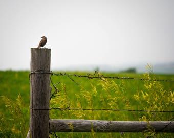 Bird on Wooden Fence