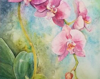 Pink Phalaenopsis Orchid Print