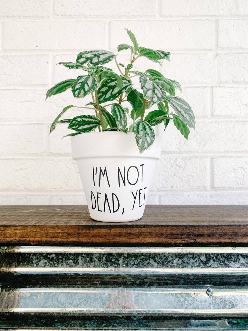 Yet Planter I/'m Not Dead Plant Pot Cute Gift Idea Garden Plant Pot Punny Planter Funny Pot