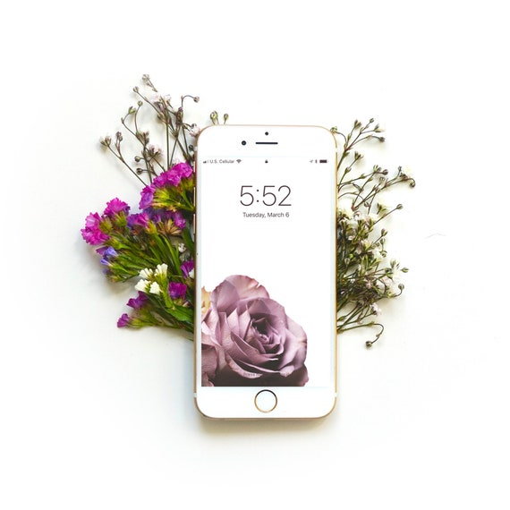 Single Rose Iphone Wallpaper Digital Download Instant Etsy