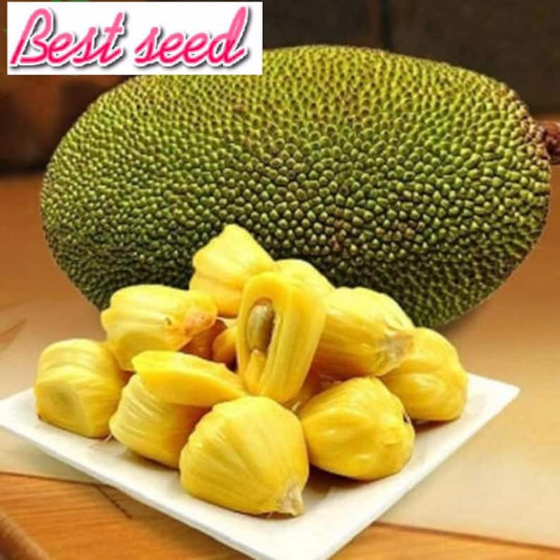 Jackfruit Seed Image