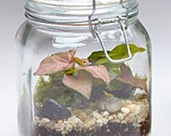 Mason Jar Terrarium Etsy