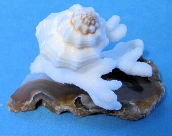 """DOLLHOUSE PAIL OF SEASHELLS 5//8/"""" H MINI BEACH DECOR tiny shell accessory 1:12"""
