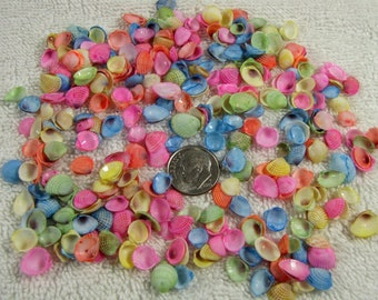 """Tiny dyed cup seashells-pastel  1/4"""" (2x3 bag-300 shells) sailors valentines, crafts, beach decor, jewelry, nautical crafts, vase fillers"""