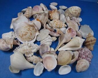 "Florida Seashells- 1 cup under 2""-  all natural, shell craft supplies, beach decor, aquariums, small shells, hand selected"