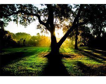 Fine Art Landscape Photography - King of Limbs, Nature Photography, Sunrise, Tree, Florida, Prints, Canvas