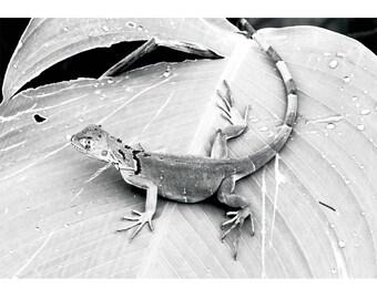 Fine Art Landscape Photography -Momentary Lapse in Season, Costa Rica, Iguana, Florida, Exposure, Prints, Canvas