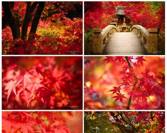 The Crimson & Scarlet Collection: Japan in Autumn/Fall - Set of 7 Red Themed Nature/Temple Photography. Digital Wallpapers/Prints
