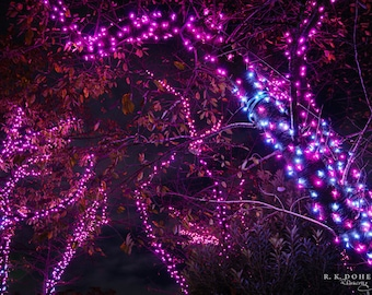 Night Nature Photography - Trees Decorated with Magenta Christmas/Holiday Lights in Ueno Park (Tokyo, Japan). Digital Wallpaper/Print