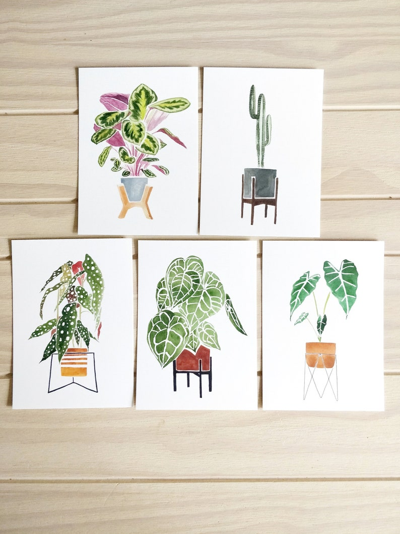 set of 5, 5x7 Premium Stock House Plants Postcards