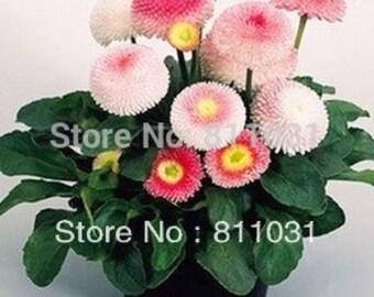 100pcs Sensitive Plants Mimosa Pudica Seeds Bonsai Garden Decor Easy Fun JB