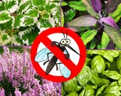 ANTI MOSQUITO mix seeds - 50 species of seeds - 1 gram - herbs and flower