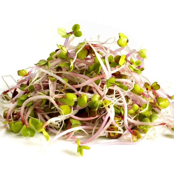 30 GRAMS Sprouting seeds 11 000 SEEDS Vegetables CRESS seeds Sprouts