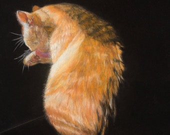 """Cat Art  """"Tidying Up"""" 