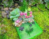 Meganium (メガニウム) Leaf Green Gameboy Color Succulent Planter Pokemon Terrarium